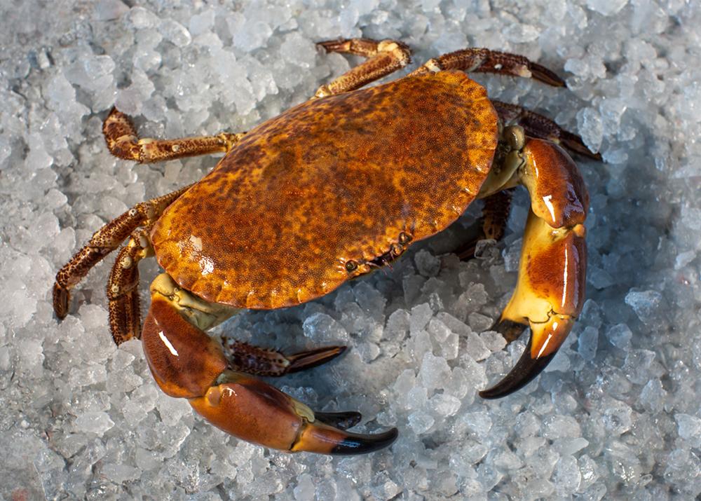 Recipe: Homemade Portland Crab Ravioli...