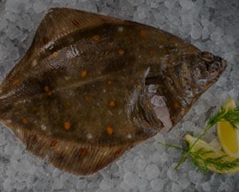 flat-fish_1