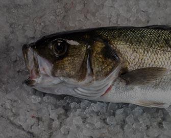 whiet-fish_1